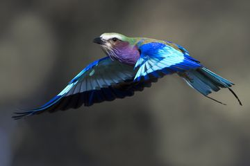 Farben und Formen am Luangwa