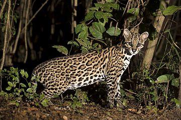 Jaguarstrand